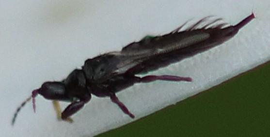 insectes10ter. Black Bedroom Furniture Sets. Home Design Ideas