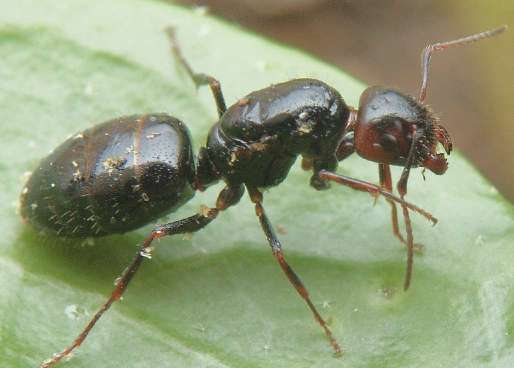 fourmis dans le corps