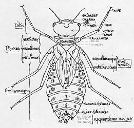 Ce n'est certainement pas une larve de dytique, elles n'ontpas cette ...