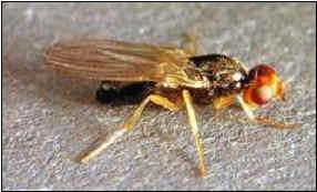 Insectes16ter for Ver gris noctuelle