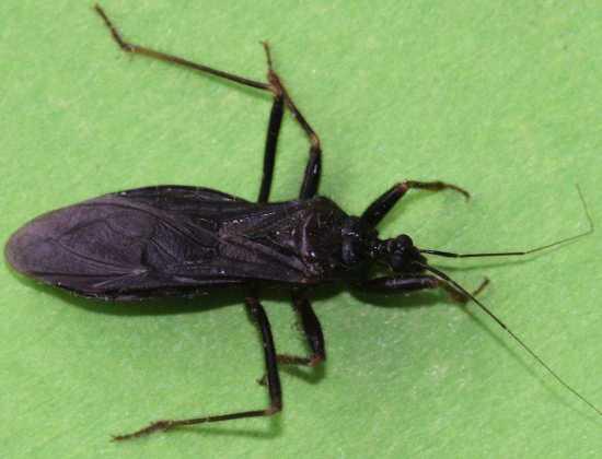 insectes10bisbis 11. Black Bedroom Furniture Sets. Home Design Ideas