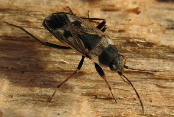 quel est cet insecte qui squatte ma chambre page 2 vie pratique discussions forum. Black Bedroom Furniture Sets. Home Design Ideas