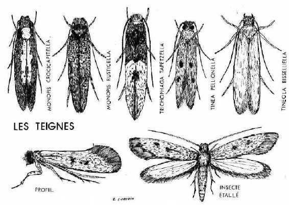 insectes48. Black Bedroom Furniture Sets. Home Design Ideas