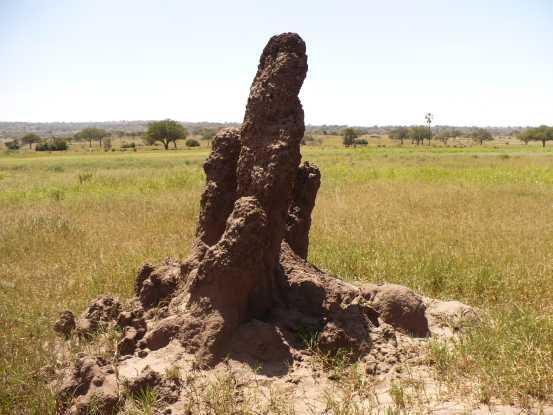 Photos des lieux Termitiere-Tanzanie