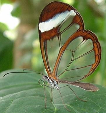 superbes papillons! - Page 2 Faux-papillons-1